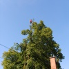 Saw-trimming a linden tree in Novo mesto